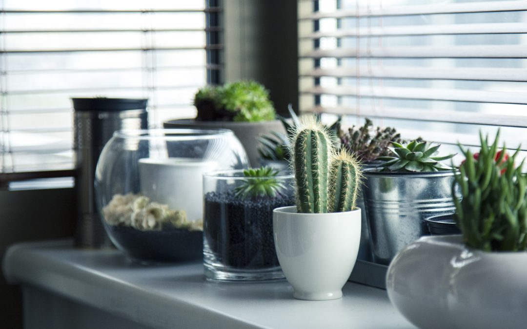 5 Indoor Gardening Tips and Ideas