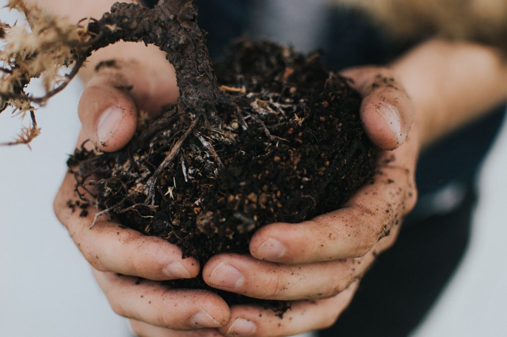 Vermicomposting, how to worm compost. Image of hands holding fresh soil.
