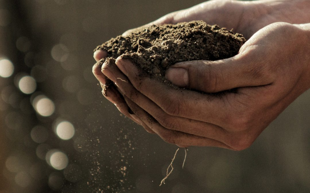 Vermicomposting: How to Worm Compost
