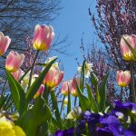 7 Tips You Need to Know to Prepare Your Flower Garden for Spring