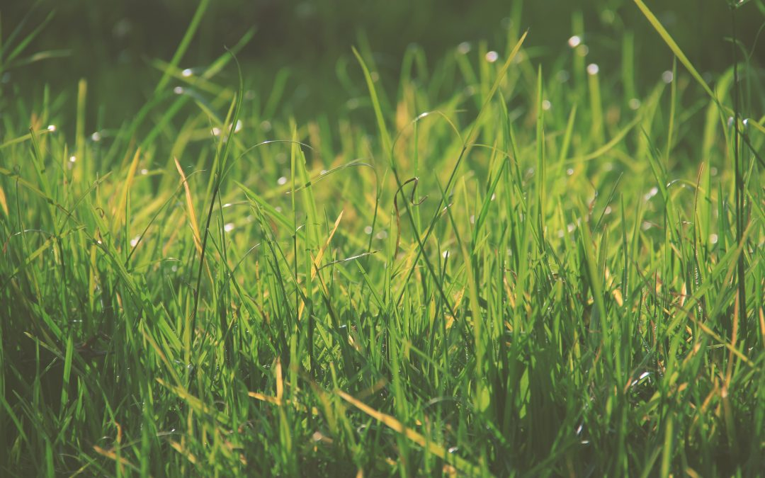 5 Tips To Revive Your Lawn For Spring