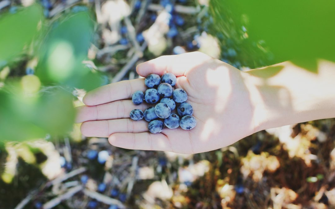 Growing 101: How to Grow Blueberries in a Pot