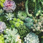 How To Take Care Of Succulents - Your Full Succulent Care Guide