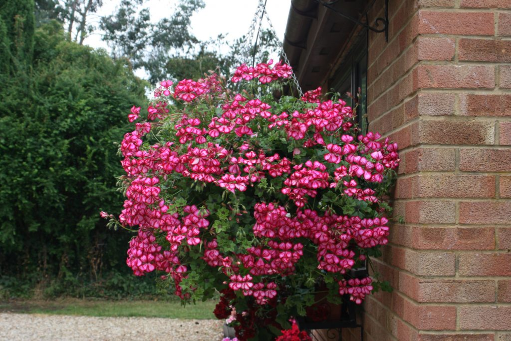 Trailing Plants For Window Boxes Our Top 6 Picks For