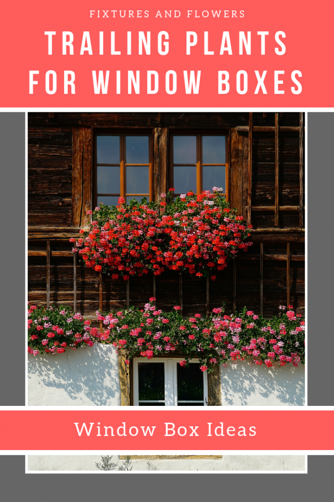 Trailing Plants For Window Boxes pinterest image.