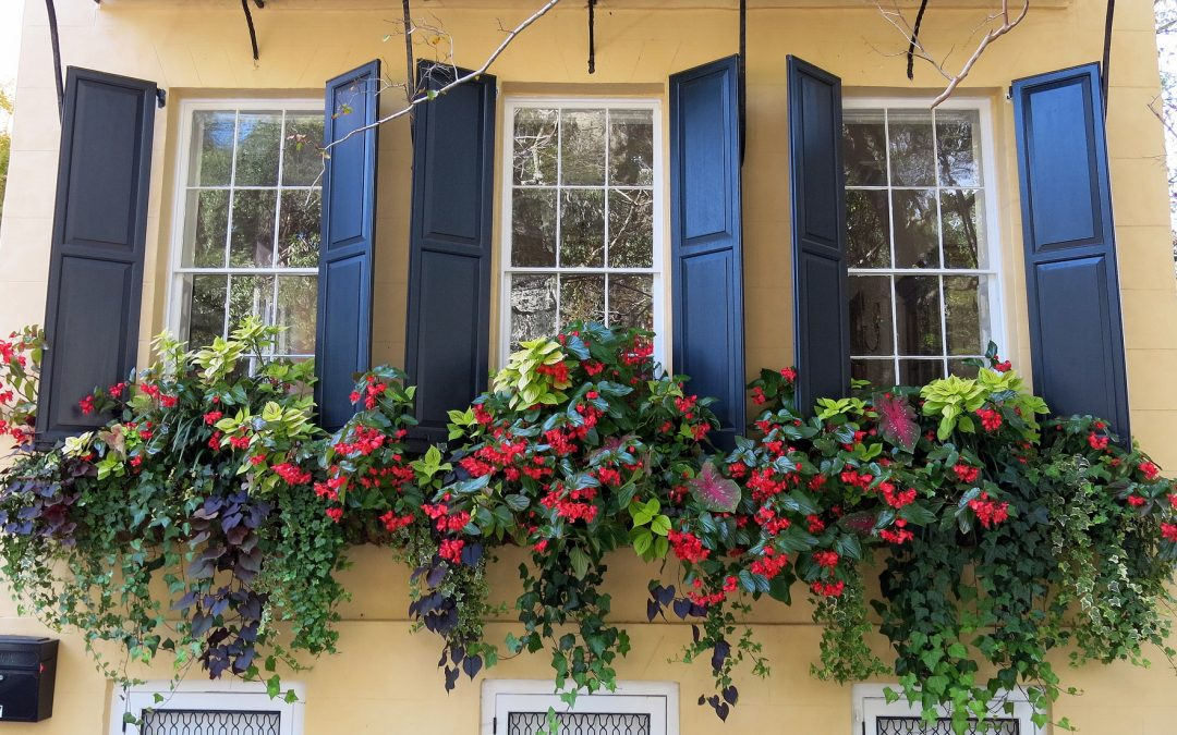 Trailing Plants For Window Boxes: Our Top 6 Picks