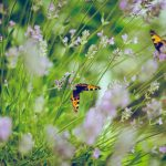 How To Make A Butterfly Garden – Creating a Pollinator Garden