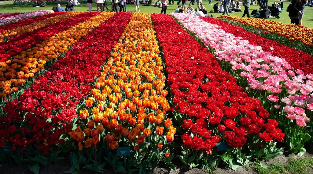 Image of rows of flowers for a contemporary garden.