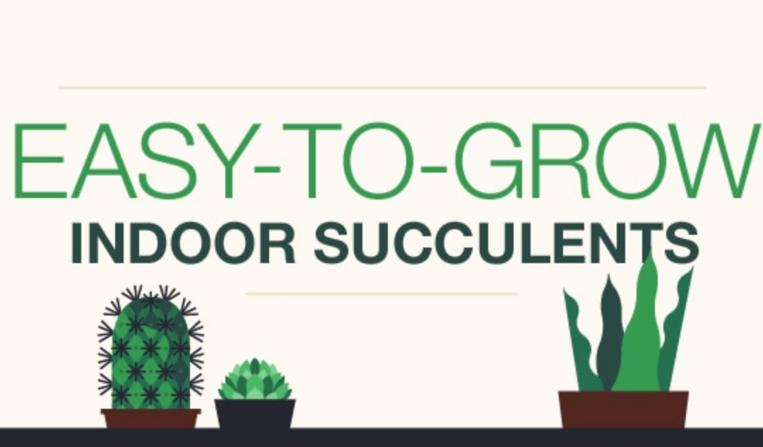 Easy To Grow Indoor Succulents Infographic
