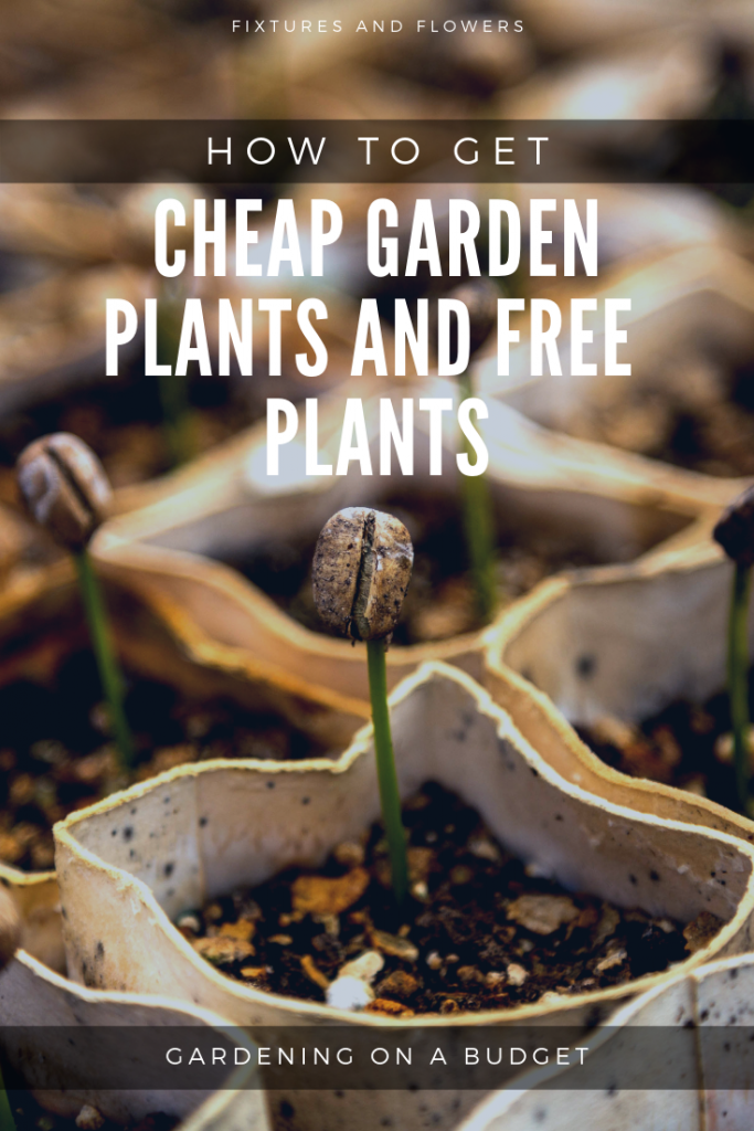 Pinterest image for how to get cheap garden plants