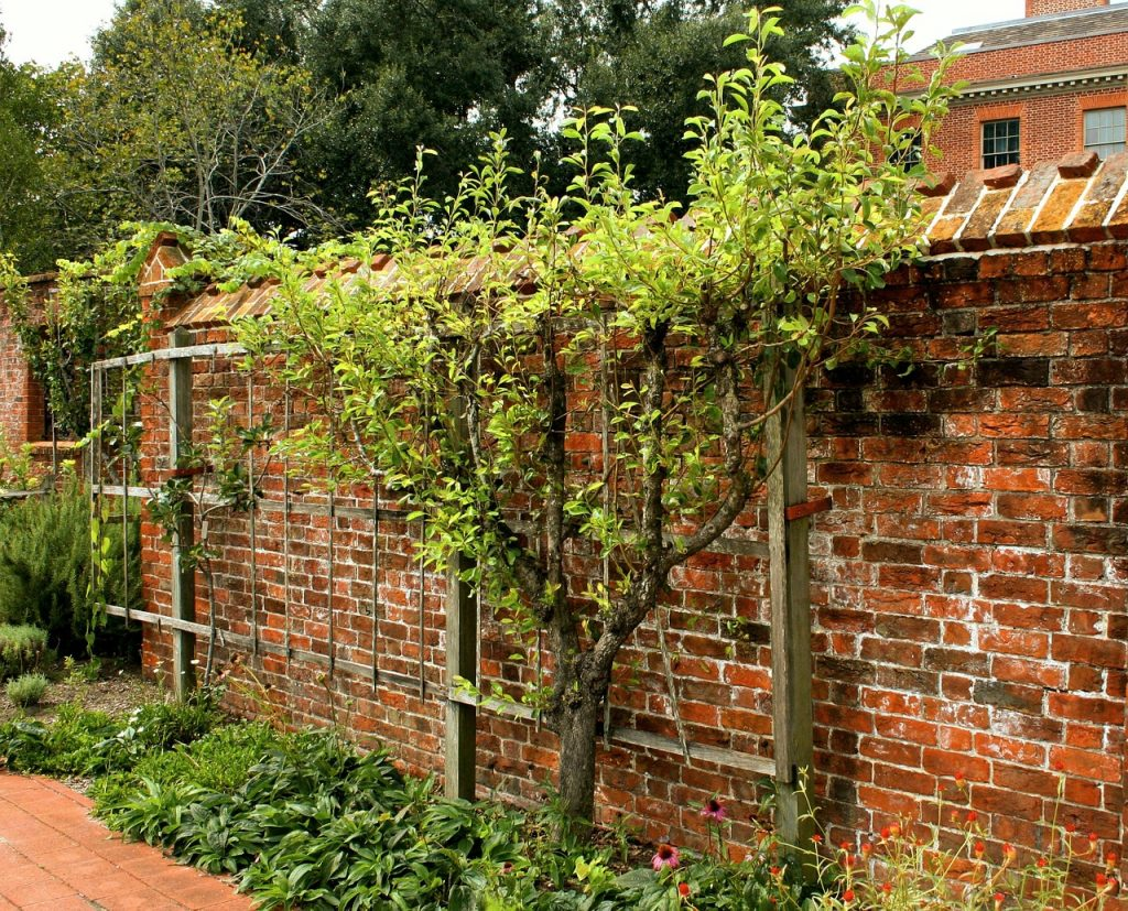 image of a garden brick wall with a small tree growing against it