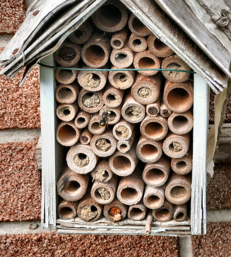 bird house bug hotel