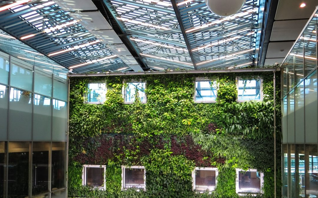 What Are Living Walls? Their Benefits and How You Can Make Your Own
